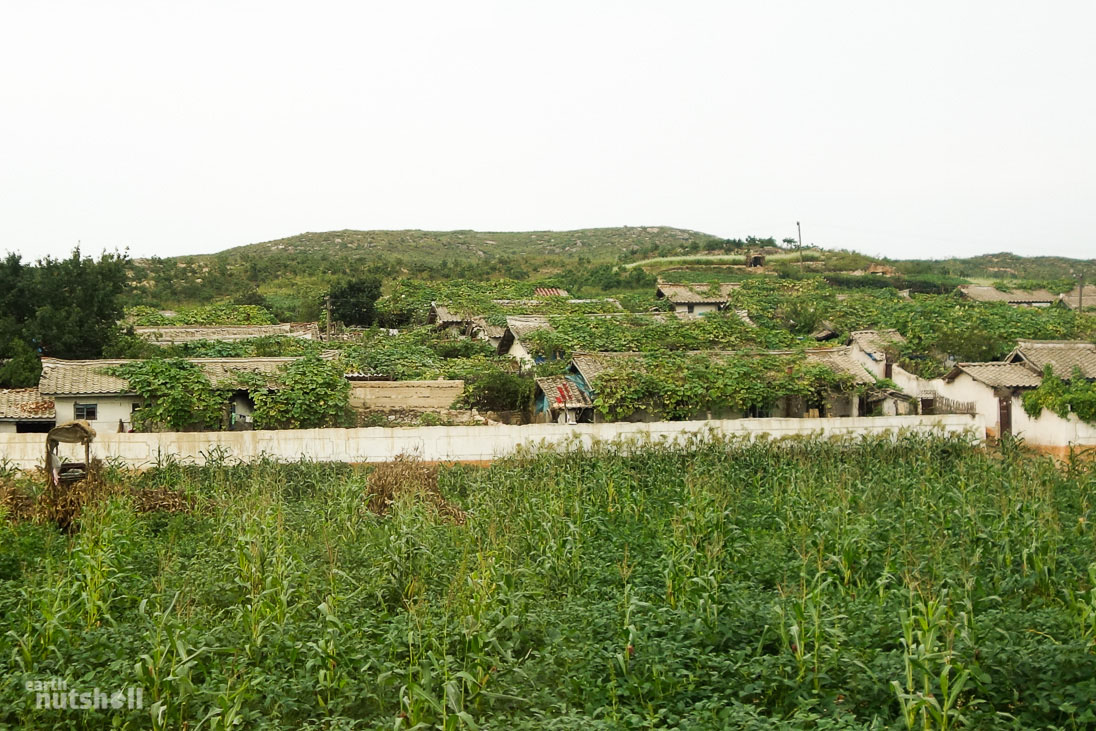 north-korea-housing-overgrown