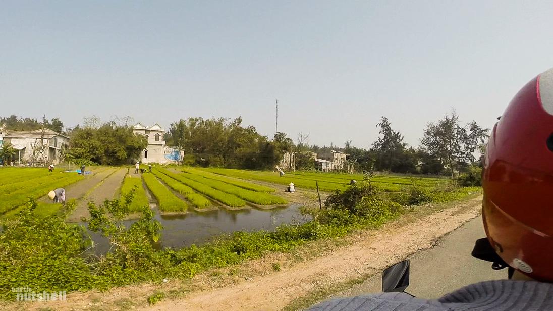 vietnam-motorbike-ricefield