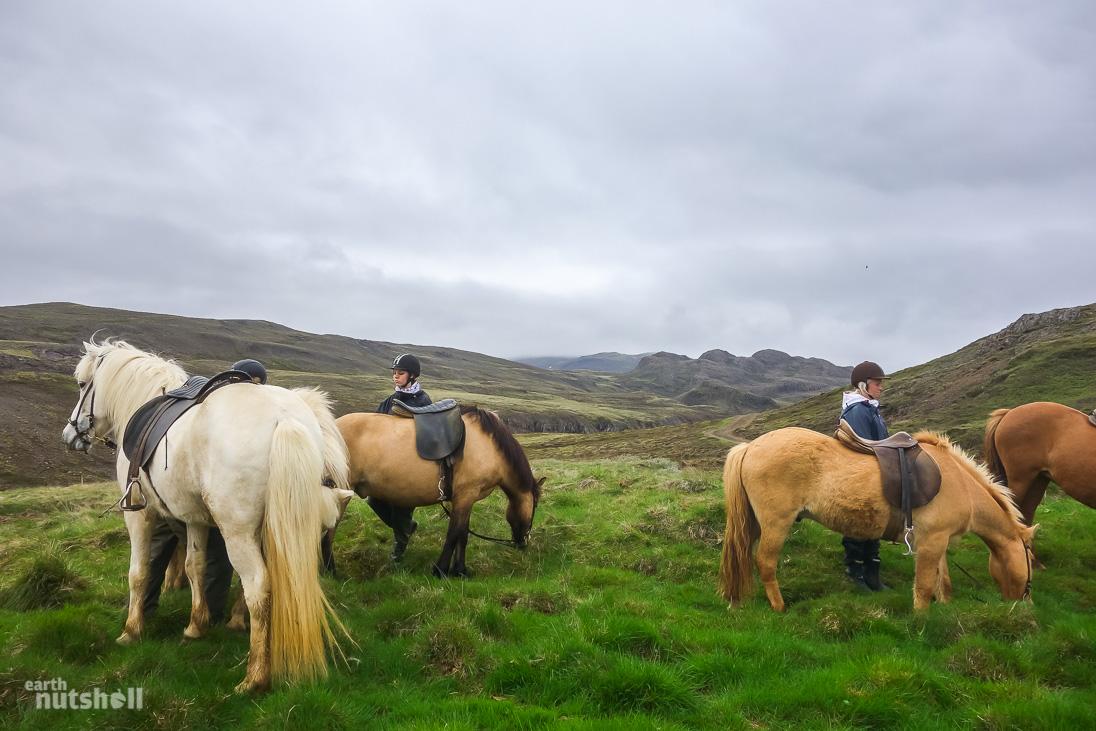horsebackridingiceland
