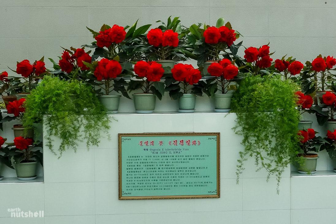 108-kimjongilia-flowers